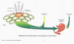 systemische effecten fotobiostimulatie